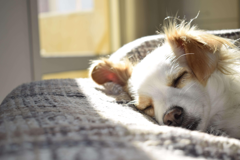 cão a dormir ao sol